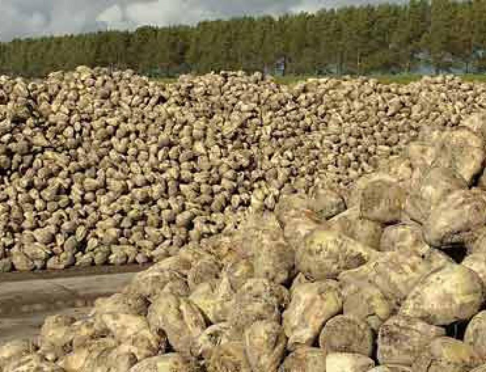 Zucker- Herstellung – Rohstoffe – Verbrauch